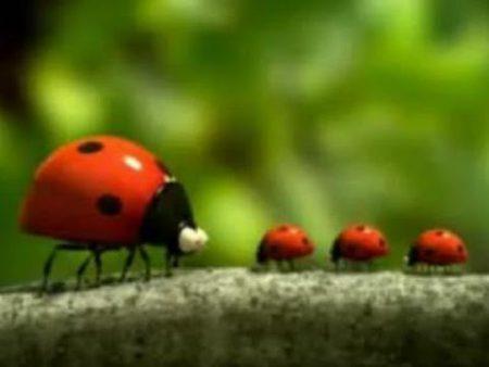 Minuscule – Het lieveheersbeestje