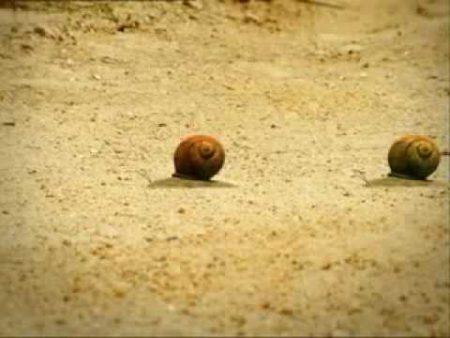 Minuscule – Lieverheersbeestje en de slakken