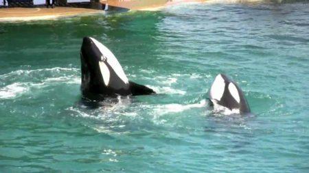 Ontmoeting met orka's aan de Côte d'Azur