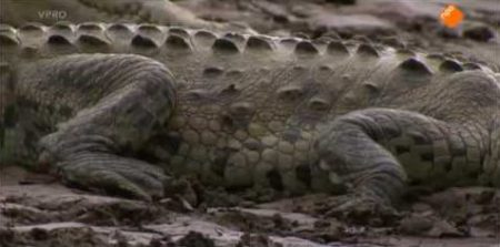 Freek In Het Wild – Gevaarlijke Spelletjes Met Krokodillen