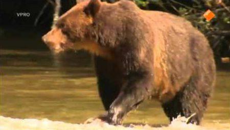 Freek In Het Wild – Grizzlyberen Zoeken
