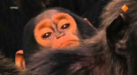 Freek In Het Wild – Slimme Chimpansees