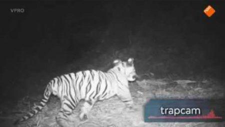 Freeks Wilde Wereld – De Sumatraanse Tijger