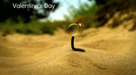 Minuscule – Valentijnsdag