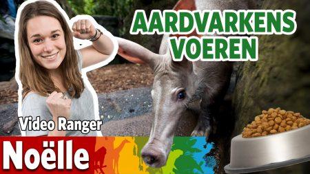 Burgers Zoo – Lusten De Aardvarkens Het Door Noëlle Gekozen Eten?