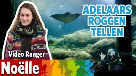 Burgers Zoo – Ik Ga Adelaarsroggen Spotten!