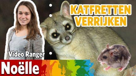 Burgers Zoo – Wat Eet De Katfret?