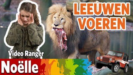 Burgers Zoo – Ik Ga De Leeuwen Voeren!