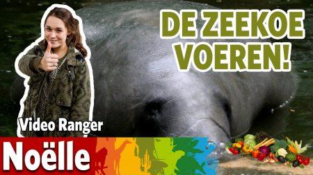 Burgers Zoo – Hoe Werkt De Zeekoe Het Voedsel Naar Binnen?