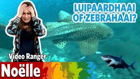 Burgers Zoo – Ik Ga Langs Bij De Luipaardhaaien!