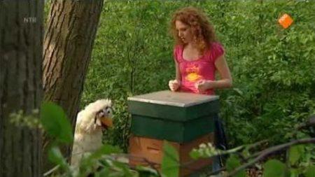 Huisje Boompje Beestje – Bijen