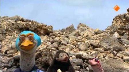 Koekeloere – Moffel En Piertje Op Vakantie Naar Curaçao
