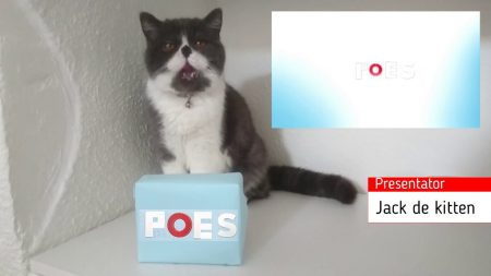 Jack de Kitten – Poes Journaal