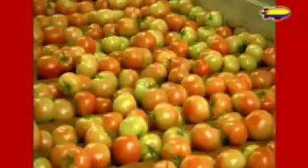 Flip De Beer – Flip Plukt Tomaten