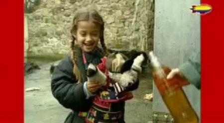 Flip De Beer – Flip Kijkt Naar IJsberen