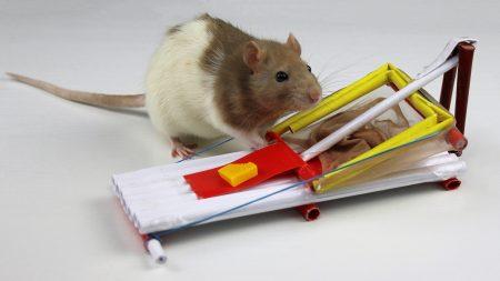 Hoe Maak Je – Een Muizenval Van Papier
