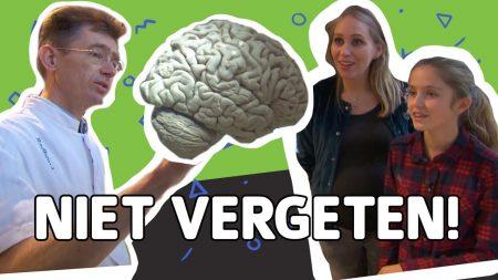 Willem Wever – Wat Gebeurt Er In De Hersenen Van Iemand Met Alzheimer