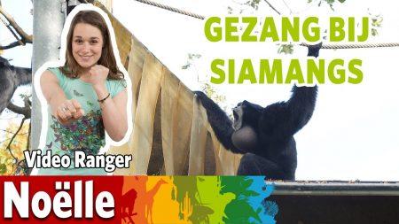 Burgers Zoo – Zingende Apen Op De Rimbavlakte!