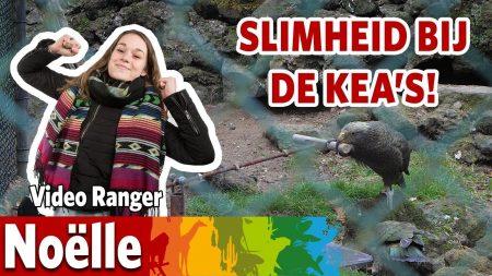 Burgers Zoo – De Kea's Zijn De Intelligentste Dieren In De Dierentuin