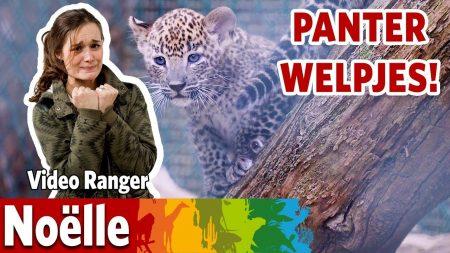 Burgers Zoo – Op Bezoek Bij De Twee Panterwelpjes!