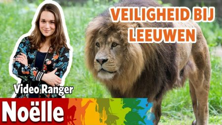 Burgers Zoo – Veiligheid Bij De Leeuwen