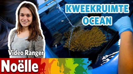 Burgers Zoo – De Kweekruimte In De Ocean!