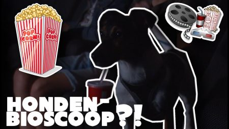 Betreden Op Eigen Risico – Hond Uitlaten Op Verboden Plaatsen?!