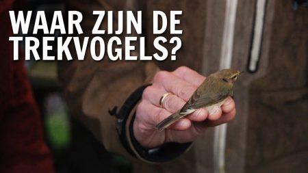 De Buitendienst – Waar Zijn De Vogels Als Ze Niet In Nederland Zijn?
