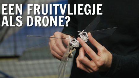 De Buitendienst – Een Fruitvliegje Als Drone?