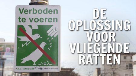 De Buitendienst – Hoe Lost Rotterdam Het Vliegende Ratten Probleem Op?