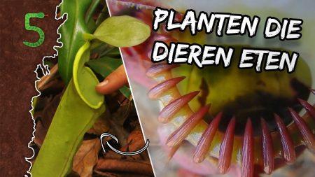 FreekTV – Freeks 5 – Planten Die Dieren Eten!