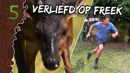 FreekTV – Freeks 5 – Verliefd Op Freek!