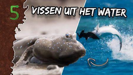 FreekTV – Freeks 5 – Vissen Jagen Op Het Land!?