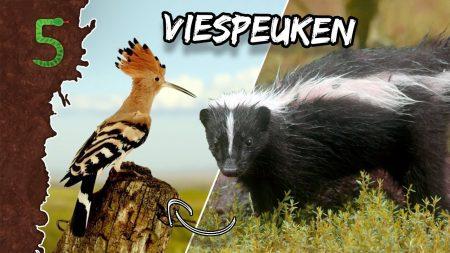 FreekTV – Freeks 5 – Je Eigen Poep Eten!?