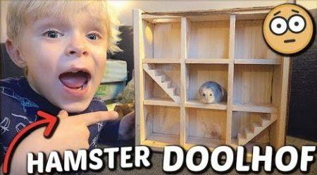 De Belliga's – Hamster Doolhof Voor Sammie! 🐹 #1544