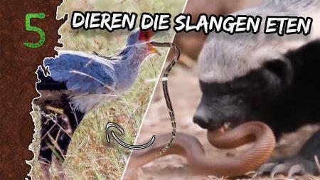 FreekTV – Dieren Die Op Slangen Jagen!
