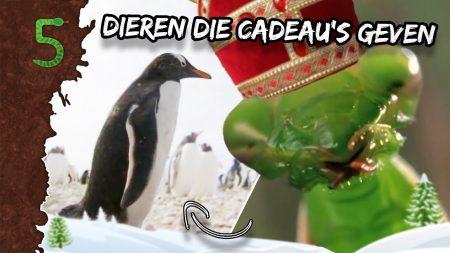 FreekTV – Geven Dieren Cadeau's?!