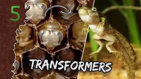 FreekTV – Dieren Of Transformers!?!