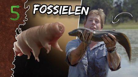 FreekTV – Levende Fossielen!