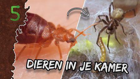 FreekTV – Dieren In Je Slaapkamer!