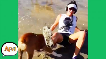 AFV 2020 – You Could Say She Got Dogged Down! 😆 – Fails Of The Month