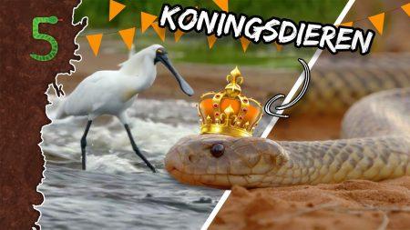 Freeks 5 – Koningsdieren!