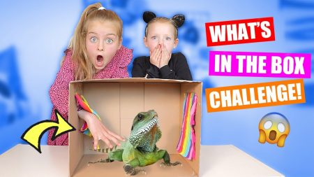 De Zoete Zusjes – What's In The Box Challenge 2020!! [Wormen, Slijm En Hagedissen?]