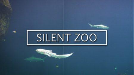 Burgers Zoo – Relaxte Beelden Van De Haaien – Silent Zoo