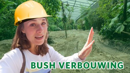 Burgers Zoo – 👷♀️🚧 Verbouwingen in Burgers' Zoo! 🚧👷♂️