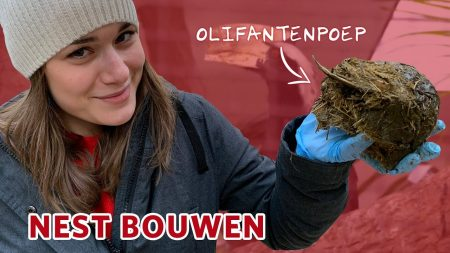 Burgers Zoo – Neushoornvogels Helpen Met Nest Bouwen! 🥚💩