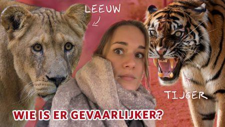 Burgers Zoo – Welk Dier Is Gevaarlijker Als Het Ontsnapt: De Tijger ? Of De Leeuw ??