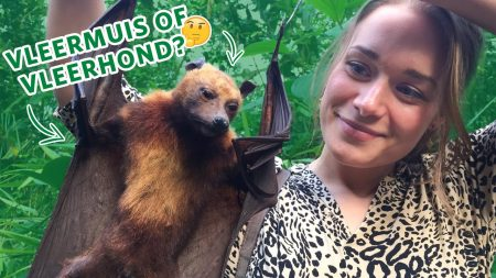 Burgers Zoo – Wat Is Het Verschil Tussen Een Vleerhond En Vleermuis? 🤔 🦇