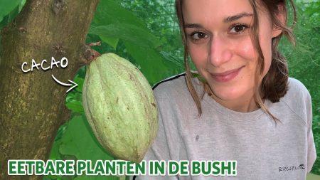 Burgers Zoo – Chocolade Uit Onze Bush 🍫