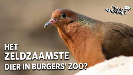 Burgers Zoo – De Meest Zeldzame Dieren In Burgers Zoo